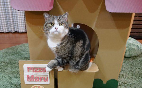 ピッツェリアまるです。