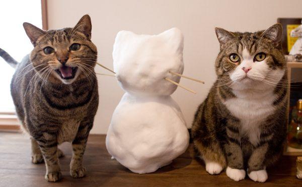 雪だるま王です。