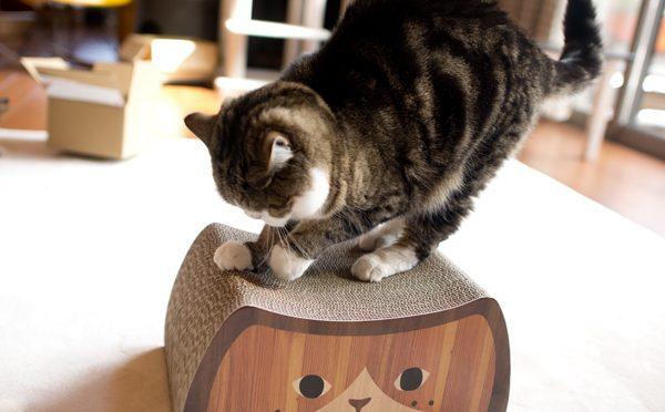 猫の日でした。-It was the day of the cat.-
