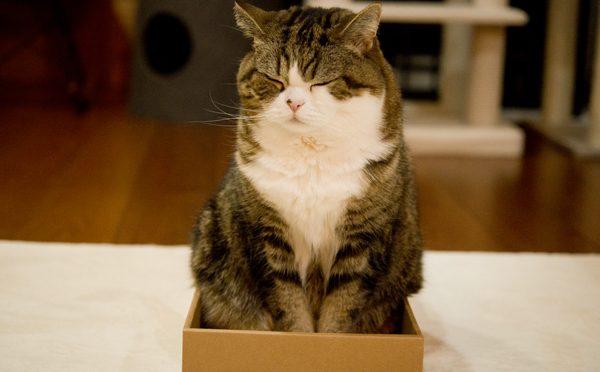 ゆとりある箱とまるとはな。The wide box and Maru&Hana.-