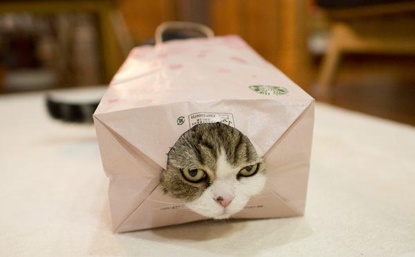 ピンク紙袋ゲットなまる。-Maru got the pink paper bag.-