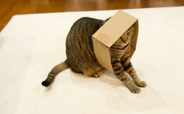 入ってみたはなと、羨ましいまる。-Hana tries the box, and Maru envies it.-