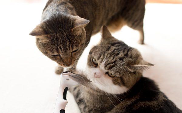 ブラッシングまる。-Brushing and Maru.-