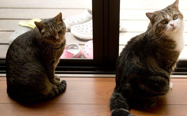 外に出たいまるとはな。-Maru&Hana want to go to the garden!-