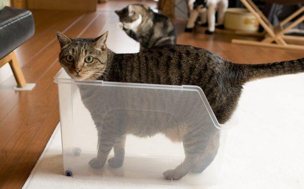 スリムなプラケースに入るはな?-Hana gets into the slim plastic case, too?-