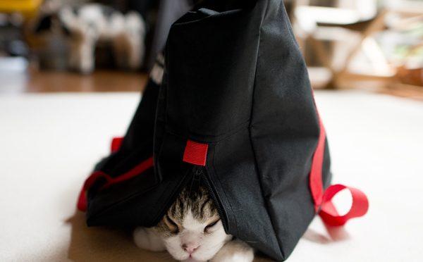黒いバッグとまるとはな。-The black bag and Maru&Hana.-