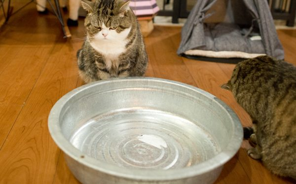 タライを片づけますよ。-I put the tub away.-