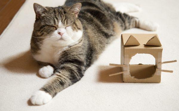 被ってても猫なのです。-Though Maru puts on the box, he is a cat.-