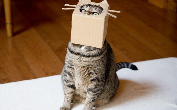 これが猫である! -This is the cat!-
