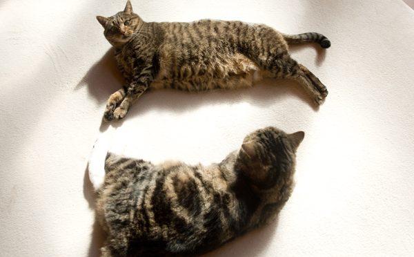 陽だまりのねこ。-Sunny spot and Maru&Hana.-