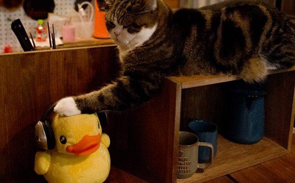 あひるとまる。Duck and Maru.