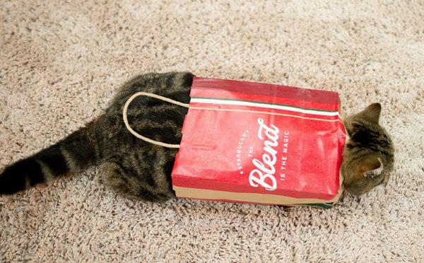 おしゃれな紙袋をゲットしたまる。Maru got the stylish paper bag.