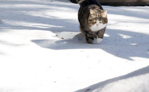 雪とまるとはな。Snow and Maru&Hana.