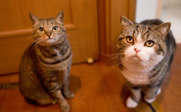 猫の知能。Intelligence of the cat.