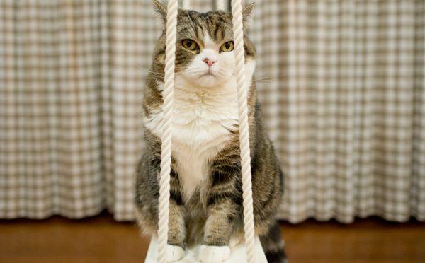 ブランコでの寛ぎ方。-How to relax on the swing.-