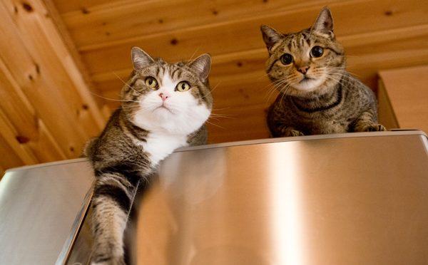 冷蔵庫の上のまるとはな。Maru&Hana're on the refrigerator.