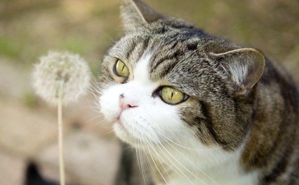 綿毛です。Dandelion fluff!