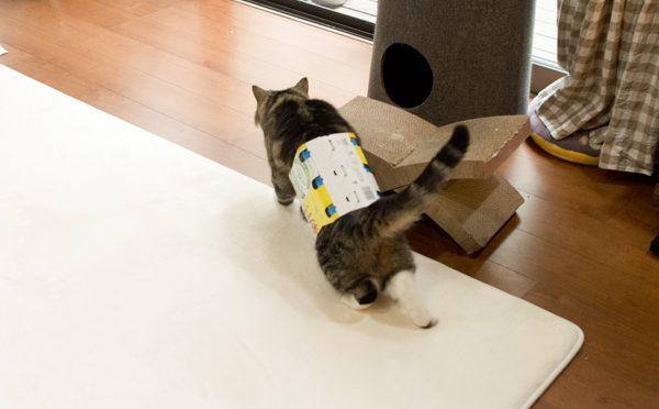もちろん、入っているまる(続き)Of course, Maru is in the box(Continuance).