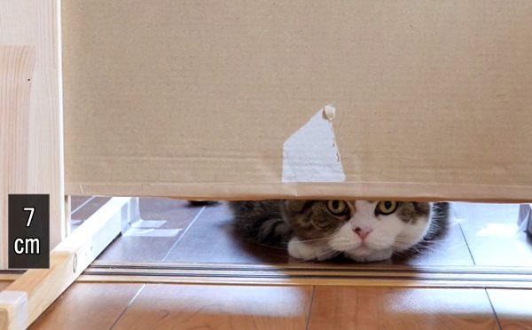 平べったいねこ。Flat cat.