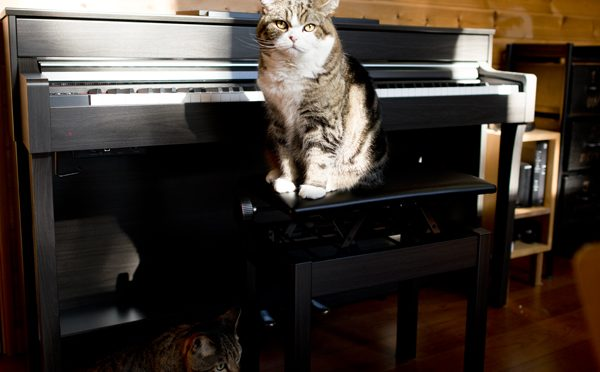ピアノ演奏をお願いします。Piano performance, please!