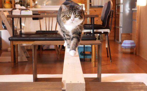 平均台とまるとはな。Balance beam and Maru&Hana.