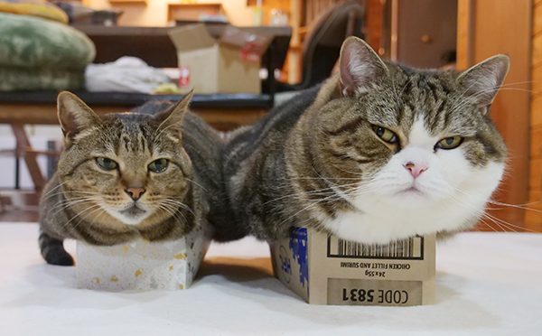 もちろん、入っているねこ×2。Of course, Maru&Hana are in the boxes.