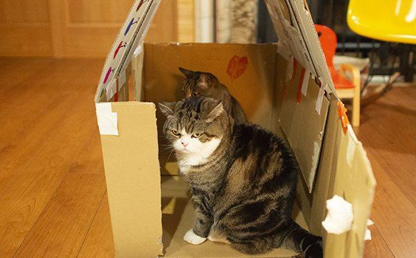 窮屈なハウス。The tight house.