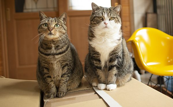 荷物チェック。Maru&Hana check the large package.