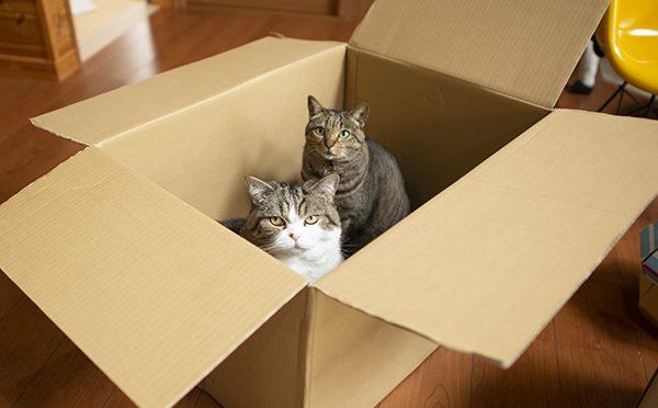 ひとり占めしたかったのは箱!?Did Maru want to monopolize the box?