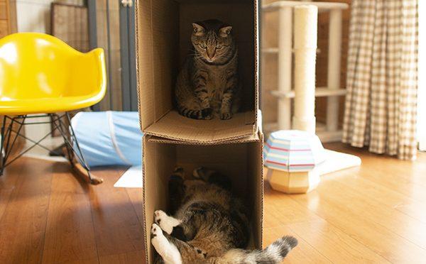 箱アパート。Box apartment.