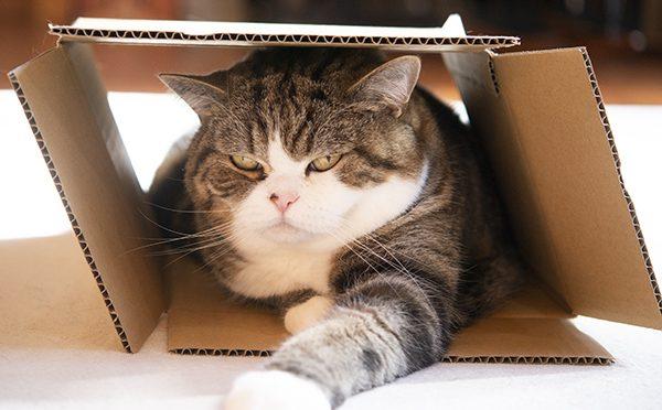 ひとり用のはずなのに…。The box is for one…?