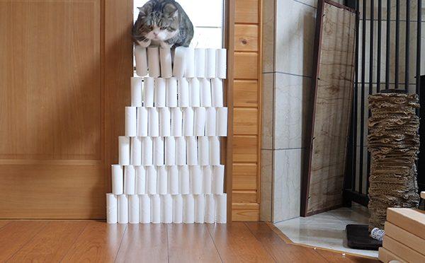 トイレットペーパーの芯再び。Cores of the toilet paper again!