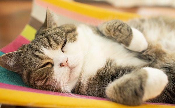すっかりお気に入り。Maru&Hana likes the new hammock.
