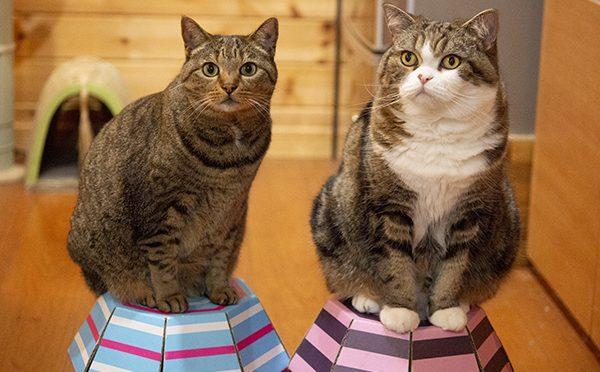 世界猫の日だったので。Because it was World Cat Day.