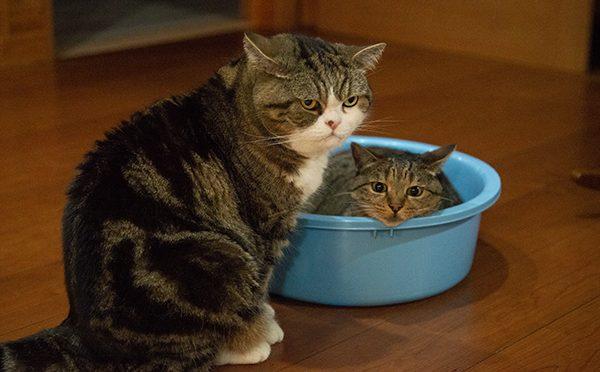 愛しのタライちゃん。It's my tub!