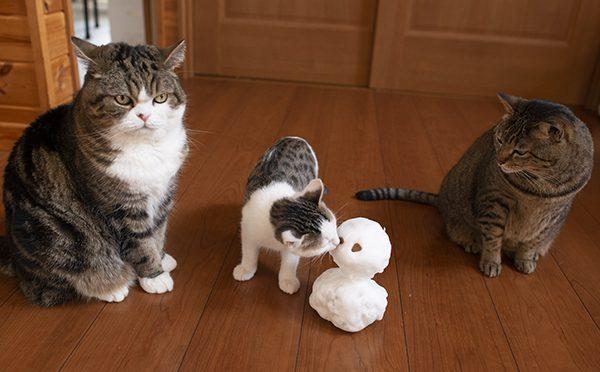 雪だるま王9世。Snowman King Ⅸ.