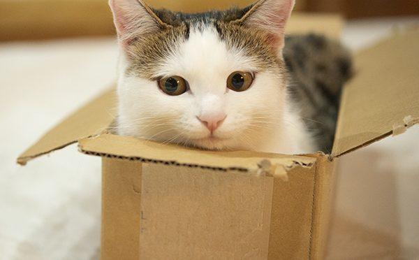 ぴったりサイズの箱。Perfect box!