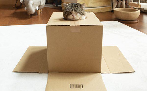 まるIN箱。Maru is in the box.