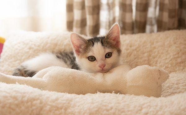 白猫さん。White cat.