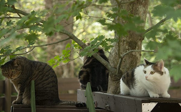 猫の成る木。Cats tree.